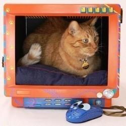 chat litiere griffoir panier