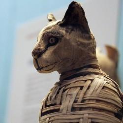 Chat momifié