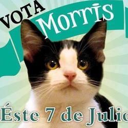 un chat se présente aux élections municipales au mexique