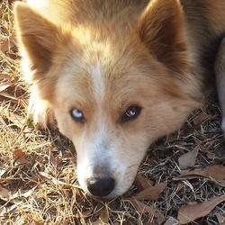 mort dun chien heroique