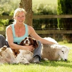 mouton chien de troupeau