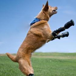 chien bionique prothèse