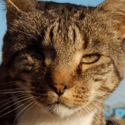 Nelson chat de l'année