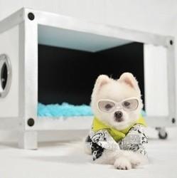 niche chien accessoires pour chien