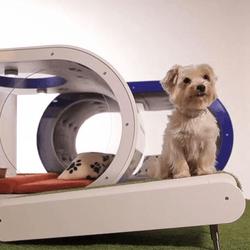 niche du futur, samsung dog house