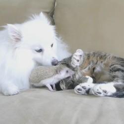 un chien, un chat et un hérisson meilleurs amis