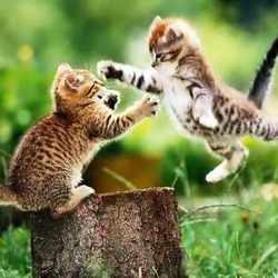 chats ninjas video faireset