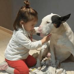 une petite fille joue au docteur avec son chien