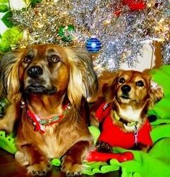Noël des animaux et des chiens abandonnés