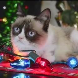 grumpy cat, chats stars