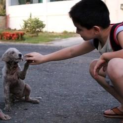 un enfant aide des chiens errants