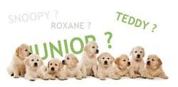 noms de chiens