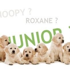 nom de chiens top 10