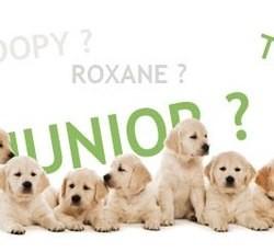 nom de chien année 2010 F