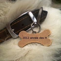 noms de chien 2012