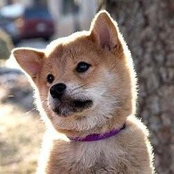 nom de chien en h 2012