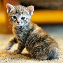 """Résultat de recherche d'images pour """"chaton"""""""