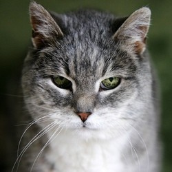 nourrir vieux chat croquettes