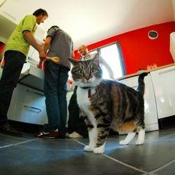 friandises nourriture pour chat