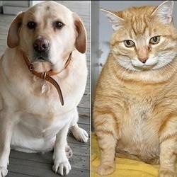chiens chats obésité surpoids
