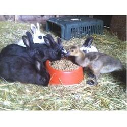oie élevée par lapins