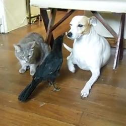 un oiseau donne à manger à un chat et un chien