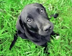 Apprendre l ordre assis son chien eduquer son for Cout d un chien assis