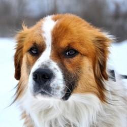 un chien blessé par balle devient un emblème de la cruauté animale