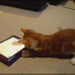 un chaton joue avec un ipad