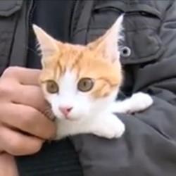 oscar chaton maltraité