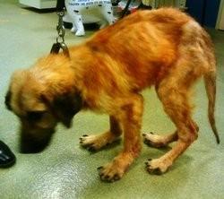 Oscar chien abandonné sauvé groupe facebook pour le placer à l'adoption