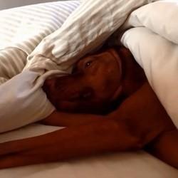 Oscar, le chien qui ne veut pas se réveiller (Vidéo du jour)