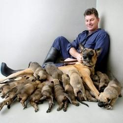 une chienne met au monde 17 petits