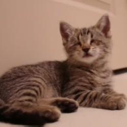un petit chat aveugle décroche le prix de la meilleure vidéo de chat