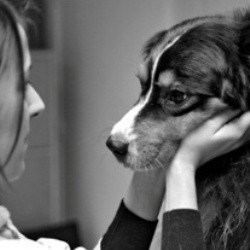 ostéopathie canine chien