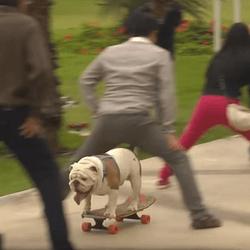 otto chien skater record du monde