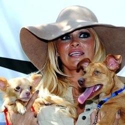chiens adoptes pamela anderson