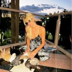 Paris Hilton Twitter lapin animaux