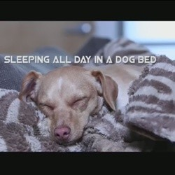 des chiens parodient la chanson Wake me up