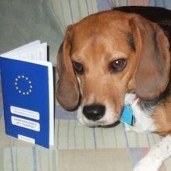 Passeport pour chien