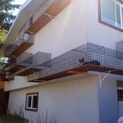 vous avez peur de laisser sortir votre chat faites comme cette famille insolite wamiz. Black Bedroom Furniture Sets. Home Design Ideas