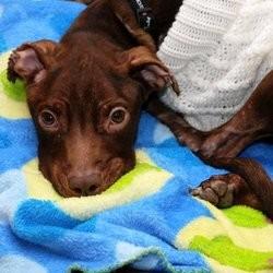 eva longoria patrick chien torturé