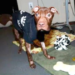 patrick chien torturé vidéo