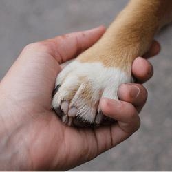 patte chien