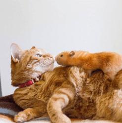Penny et Tarcil, chat et hamster