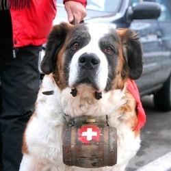 permis pour chien suisse