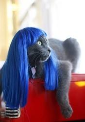 Perruque pour chat