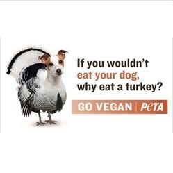 peta dinde chien campagne choc thanksgiving