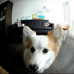 Petbot objet connecté pour chien et chat