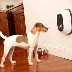 PetChatz, une webcam pour voir et parler à son animal